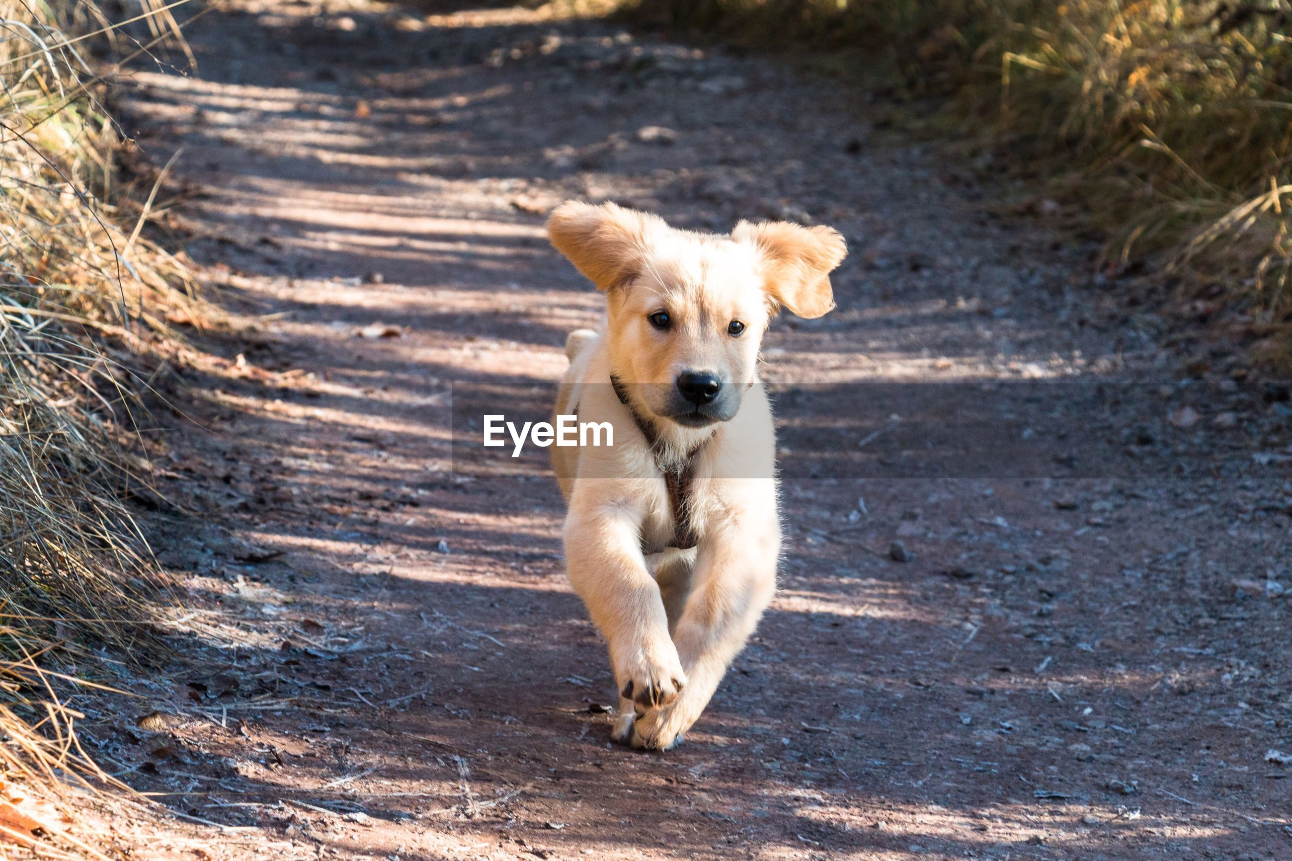 dog, pets, one animal, running, animal themes, domestic animals, outdoors, motion, day, walking, looking at camera, no people, full length, beach, mammal, portrait, nature