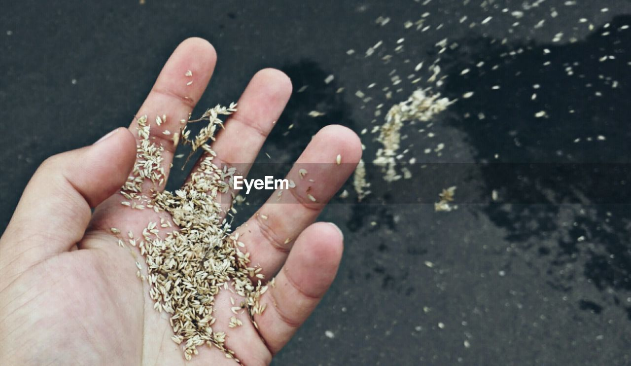 Cropped hand of person holding seeds