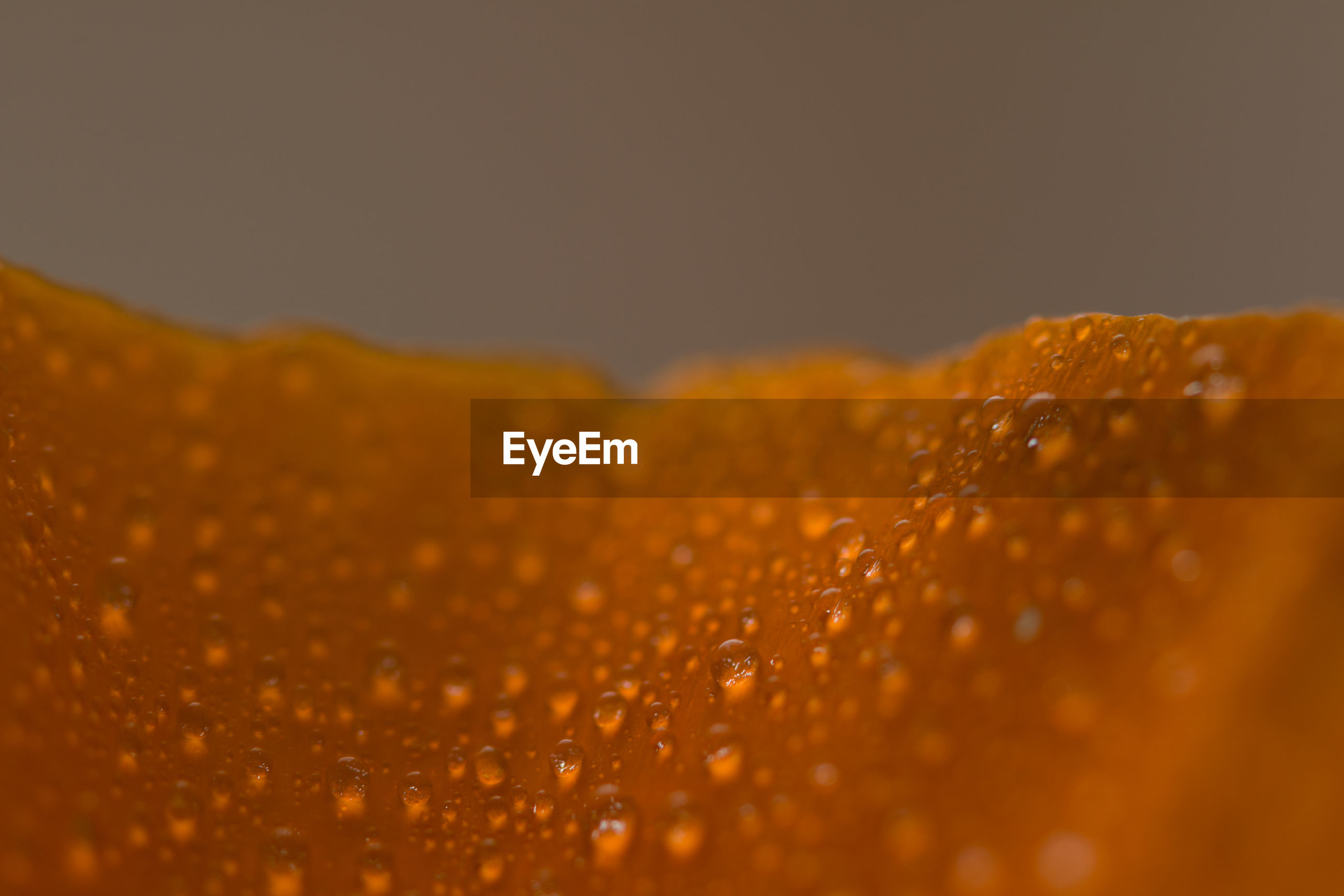 Extreme close-up of water drops on orange flower