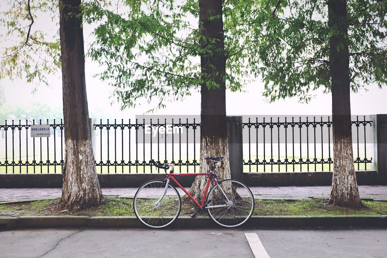 Bicycle Against Trees In City