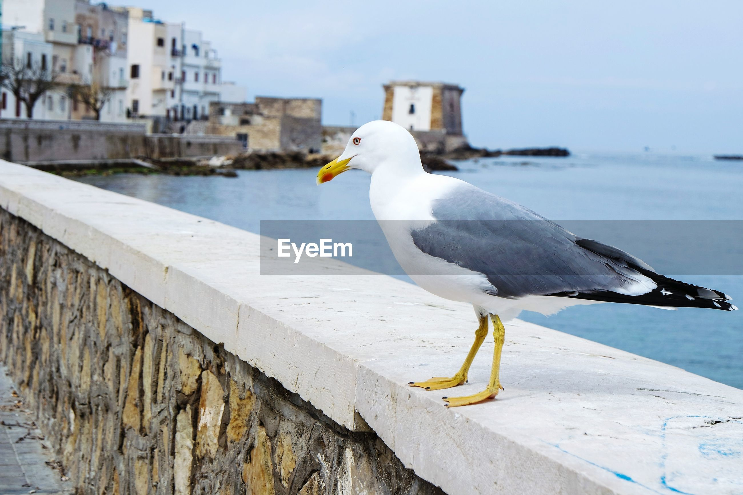 Side view of seagull perching on retaining wall by sea