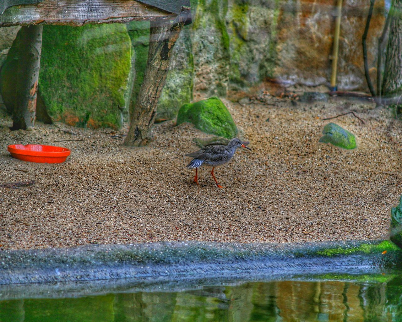animal themes, animal, animals in the wild, animal wildlife, vertebrate, one animal, bird, water, no people, day, nature, lake, plant, wood - material, outdoors, land, tree, selective focus