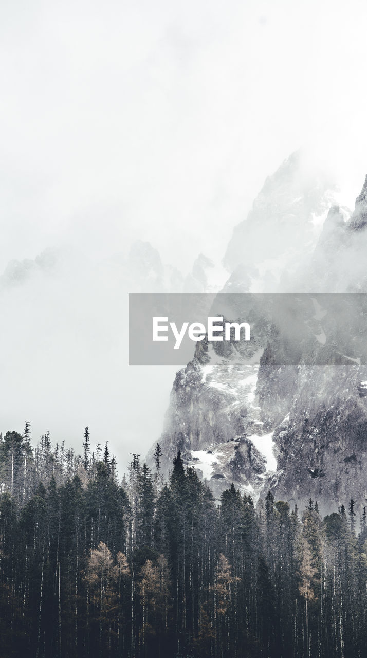 Trees and mountains at forest during winter