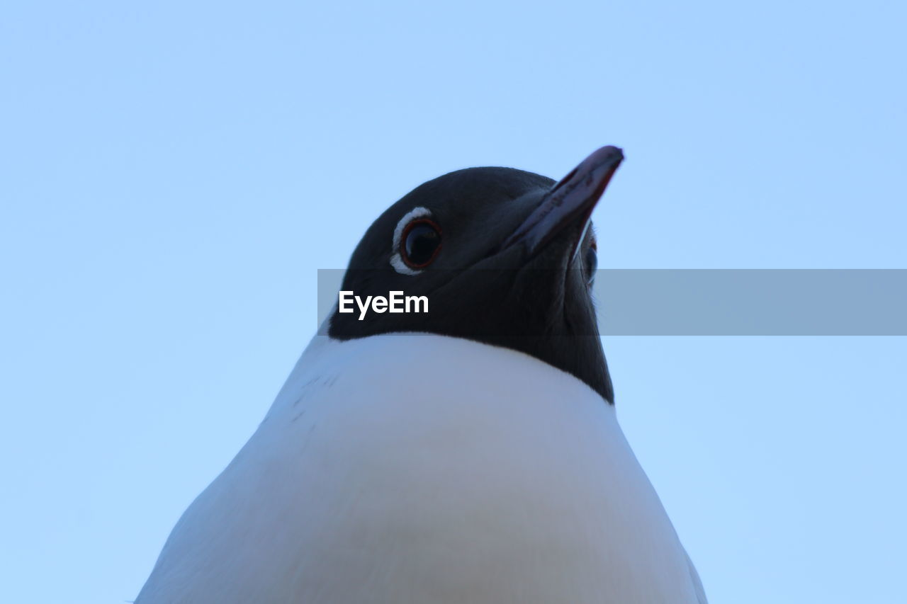 LOW ANGLE VIEW OF A BIRD