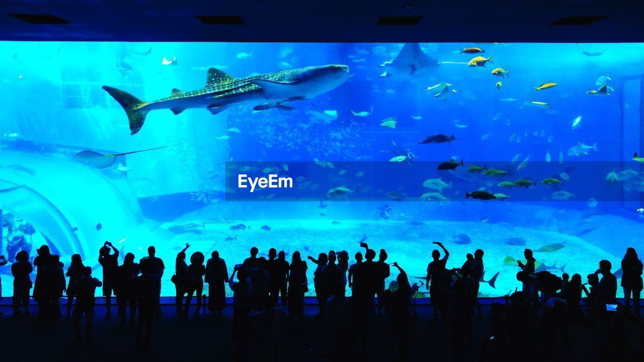 aquarium, fish, large group of people, large group of animals, real people, silhouette, animals in captivity, sea life, leisure activity, men, water, enjoyment, indoors, watching, whale shark, lifestyles, blue, animals in the wild, standing, women, swimming, togetherness, nature, day, people