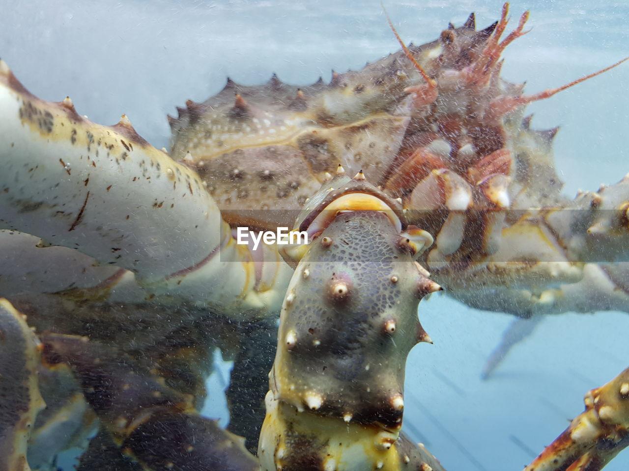 sea, animals in the wild, animal wildlife, animal themes, water, animal, underwater, sea life, marine, one animal, close-up, no people, nature, undersea, crustacean, fish, swimming, crab, outdoors