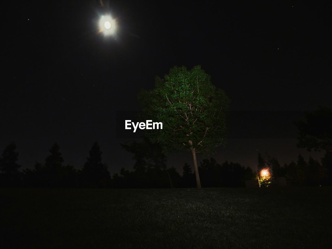 night, tree, moon, nature, tranquil scene, tranquility, beauty in nature, illuminated, moonlight, no people, outdoors, scenics, landscape, sky, grass, growth, astronomy