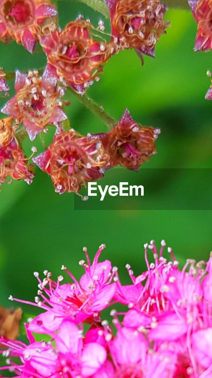 flower, growth, pink color, fragility, beauty in nature, petal, nature, plant, freshness, close-up, day, outdoors, no people, blooming, flower head