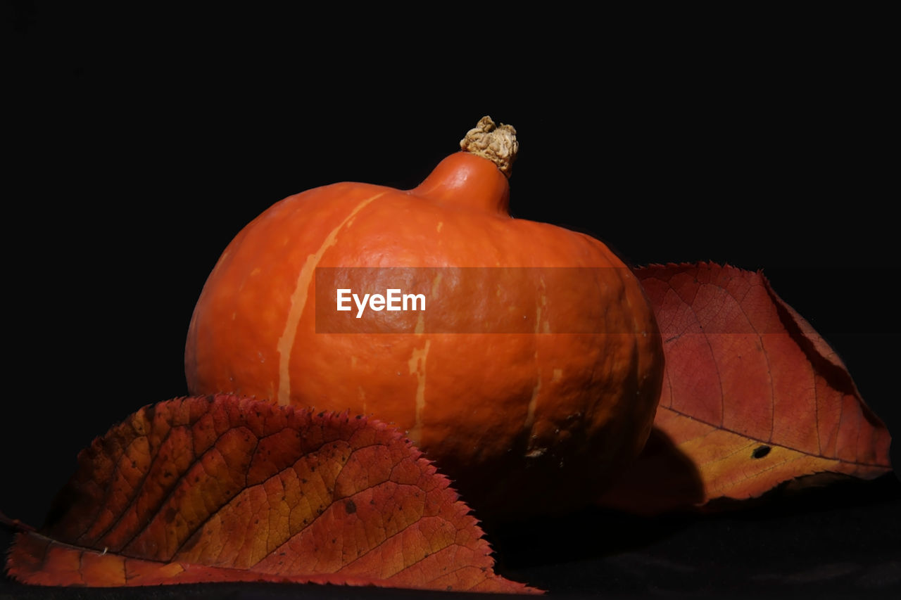 Close-Up Of Leaves And Pumpkin Against Black Background