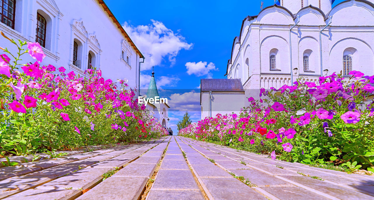 built structure, building exterior, architecture, flowering plant, flower, plant, building, pink color, nature, sky, day, growth, no people, beauty in nature, freshness, fragility, vulnerability, arch, outdoors, the way forward, purple