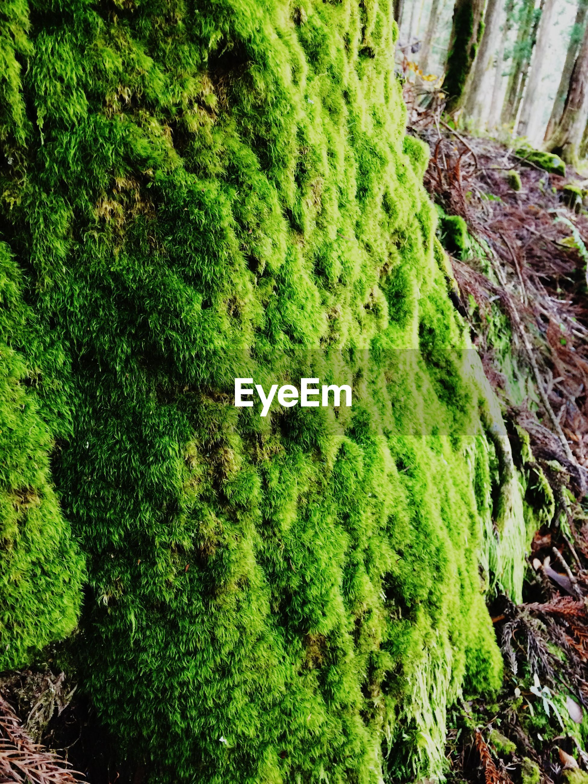 green color, growth, plant, nature, tree, moss, grass, high angle view, tranquility, forest, beauty in nature, day, outdoors, lush foliage, no people, green, field, growing, tranquil scene, leaf