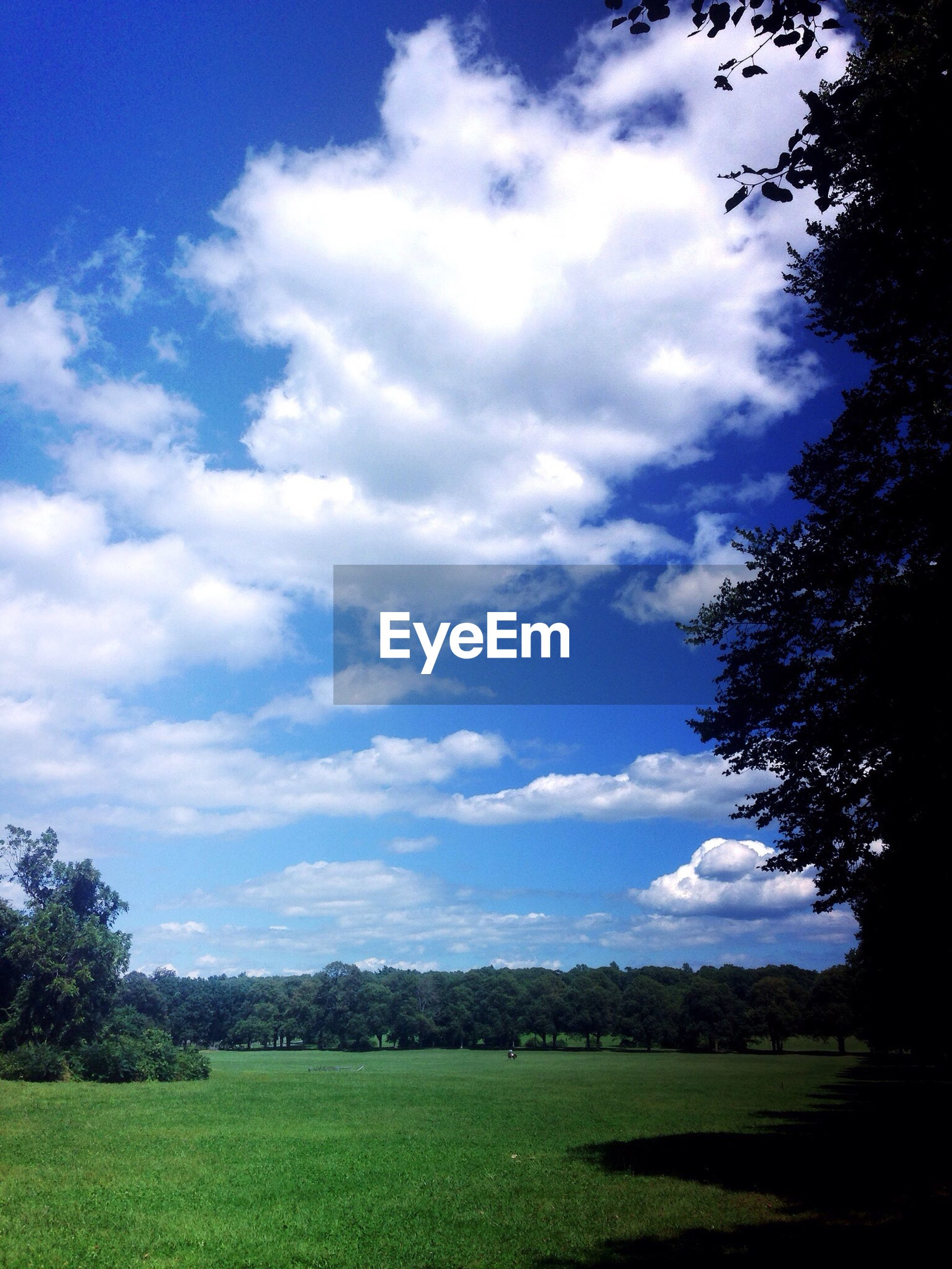 Scenic view of trees on grassy field against sky