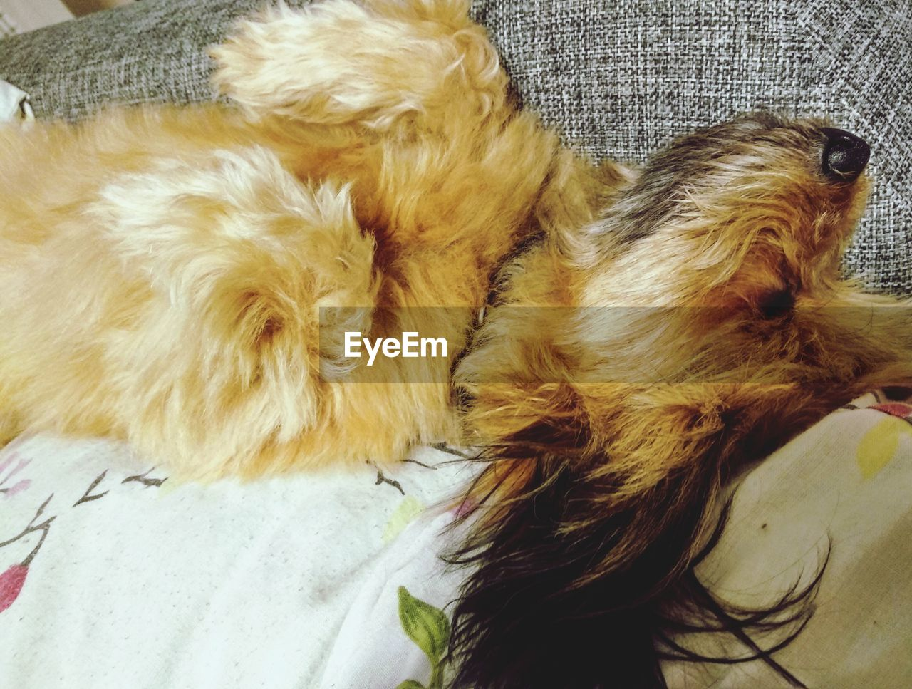 domestic, pets, domestic animals, mammal, animal themes, dog, one animal, canine, animal, relaxation, furniture, vertebrate, indoors, sleeping, home interior, animal hair, bed, hair, lying down, high angle view, no people
