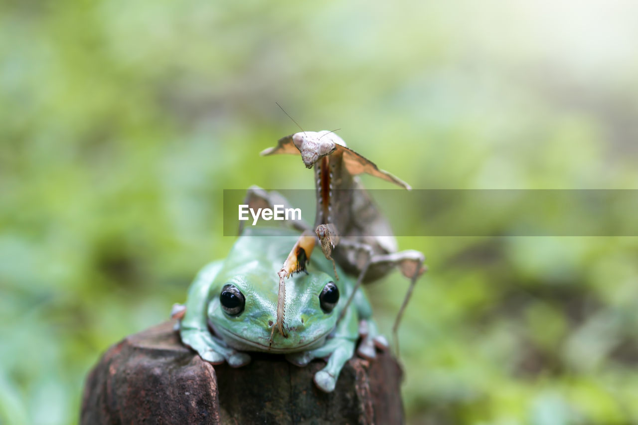 close-up, animal, animal themes, animals in the wild, focus on foreground, one animal, animal wildlife, invertebrate, day, no people, insect, nature, plant, outdoors, selective focus, green color, animal body part, growth, animal antenna, zoology, animal eye
