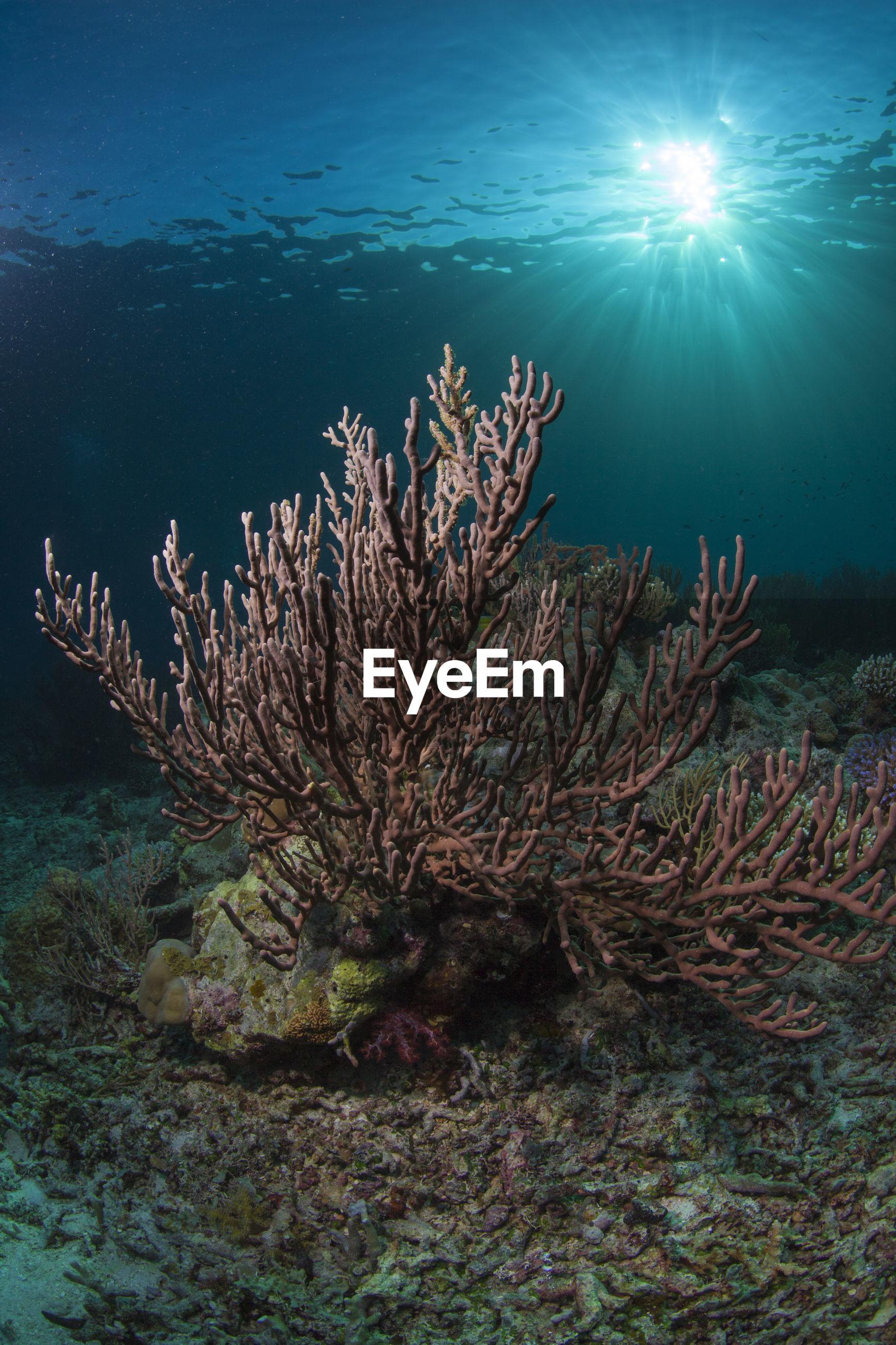 Multi colored coral underwater