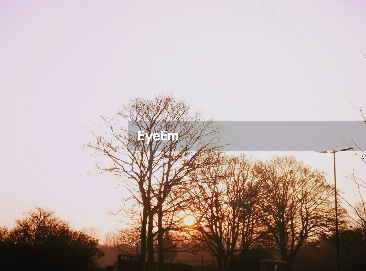 tree, bare tree, nature, low angle view, outdoors, clear sky, silhouette, no people, tranquility, sky, beauty in nature, day, branch, scenics