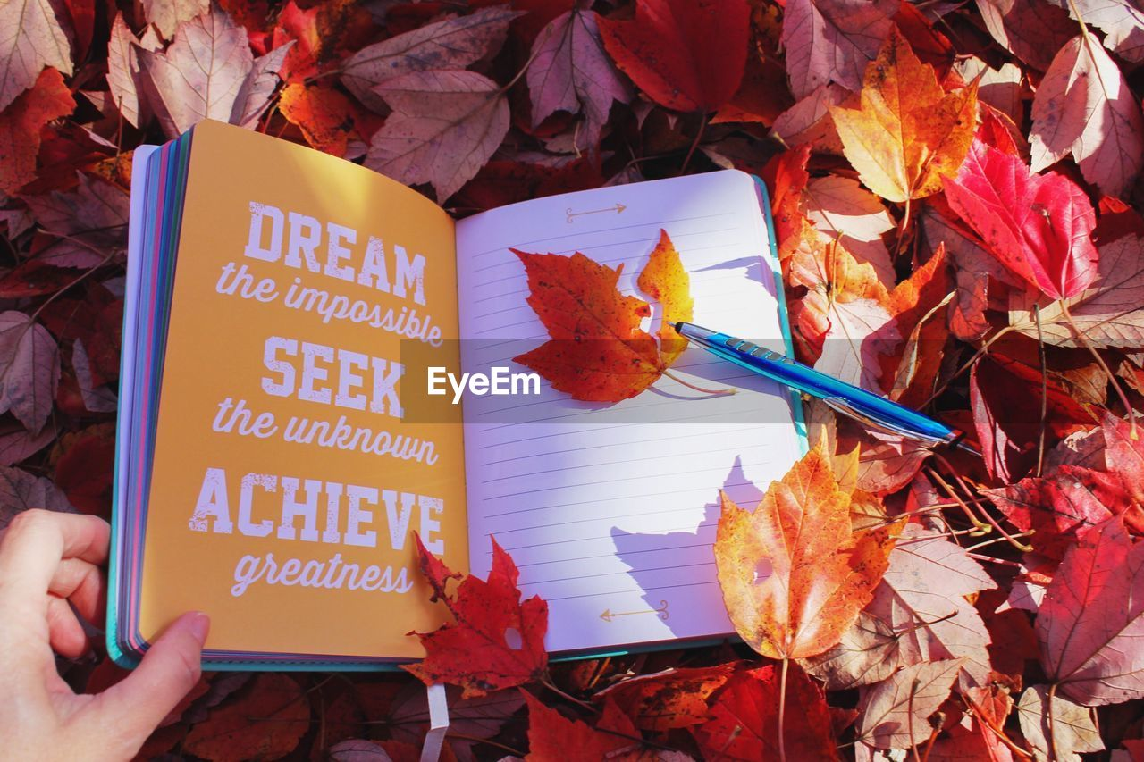 autumn, leaf, human hand, change, human body part, real people, maple leaf, one person, holding, outdoors, day, nature, multi colored, close-up, people