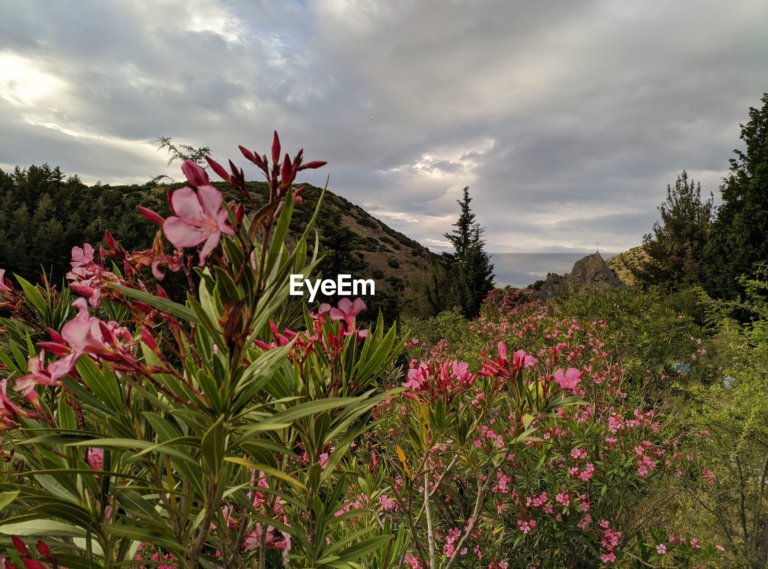 PINK FLOWERING PLANTS AGAINST TREES AND SKY