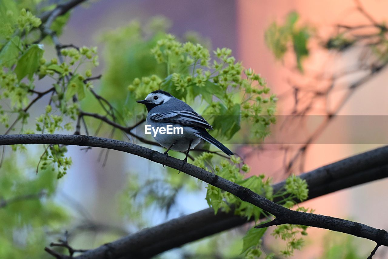 animal wildlife, animal themes, bird, animal, one animal, vertebrate, animals in the wild, plant, perching, tree, branch, no people, focus on foreground, nature, low angle view, day, green color, outdoors, beauty in nature, selective focus