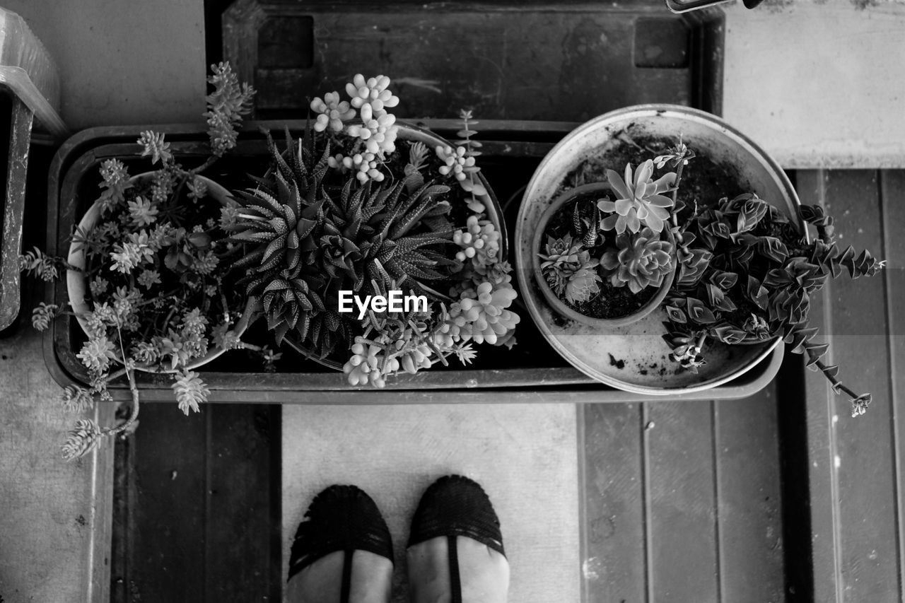human body part, one person, personal perspective, real people, low section, human leg, body part, directly above, shoe, lifestyles, flower, plant, high angle view, indoors, freshness, standing, flowering plant, day, unrecognizable person, human foot, flower arrangement, bouquet
