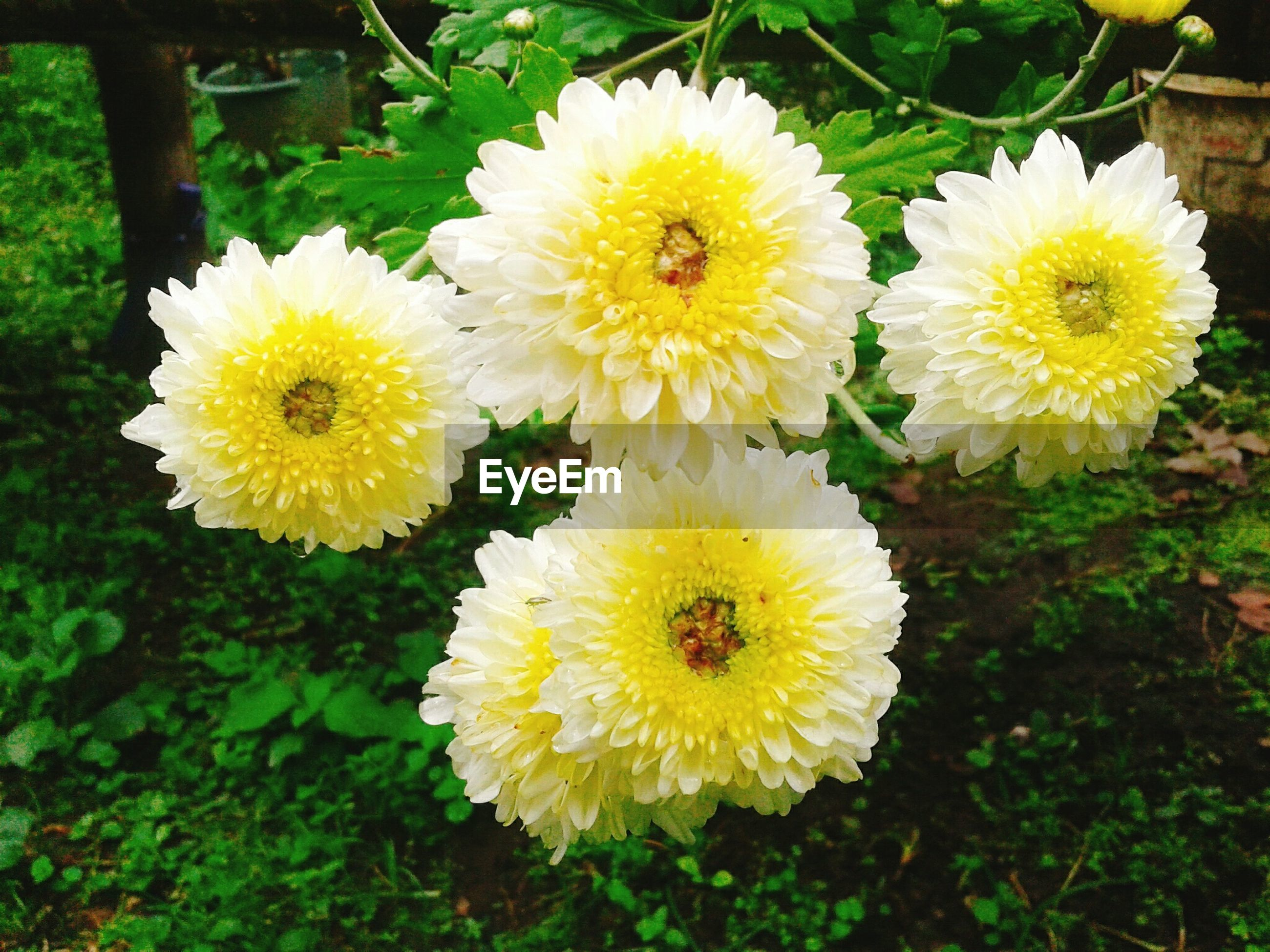 flower, nature, fragility, beauty in nature, yellow, flower head, growth, petal, freshness, outdoors, no people, plant, blooming, close-up, day