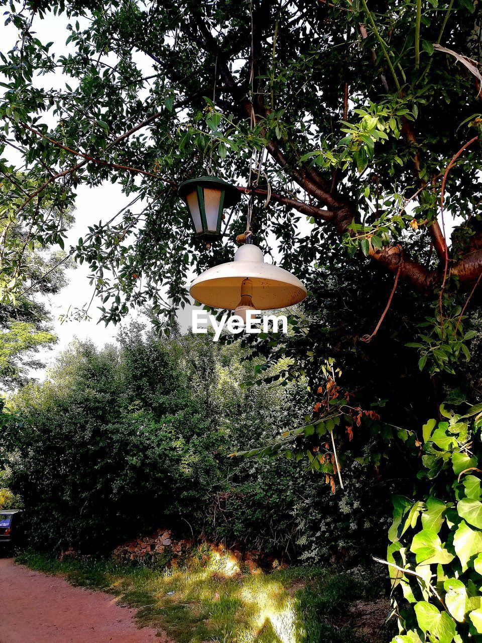 plant, tree, growth, no people, lighting equipment, nature, hanging, outdoors, day, front or back yard, garden, formal garden, beauty in nature, architecture, low angle view, green color, built structure, electric lamp, lantern, tranquility
