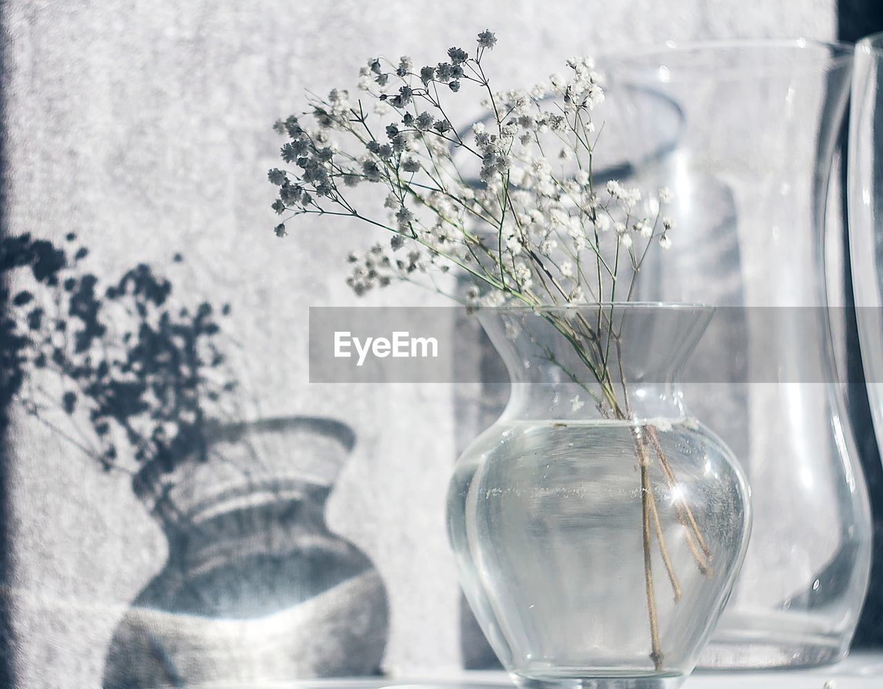 vase, plant, nature, glass - material, transparent, no people, indoors, flower, close-up, flowering plant, beauty in nature, vulnerability, fragility, table, decoration, growth, day, flower head, arrangement, glass, flower arrangement