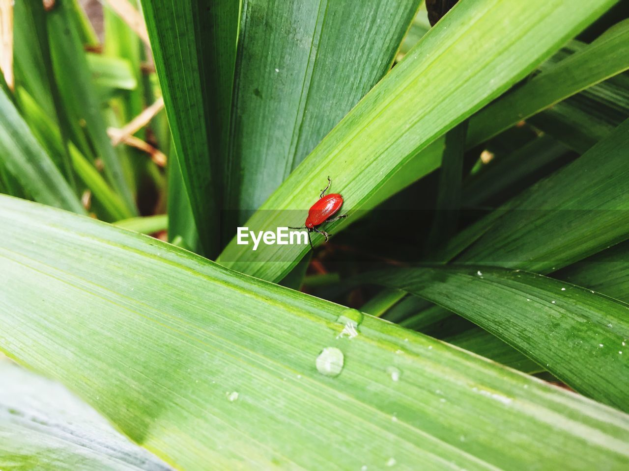 leaf, one animal, insect, green color, animals in the wild, animal themes, nature, plant, growth, day, outdoors, ladybug, red, animal wildlife, no people, close-up, tiny, beauty in nature, fragility