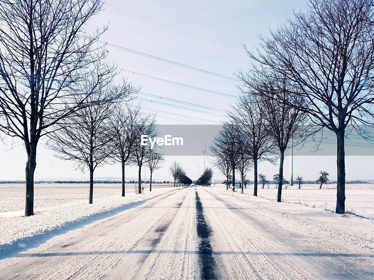 tree, bare tree, the way forward, direction, diminishing perspective, plant, transportation, snow, nature, cold temperature, winter, sky, road, day, vanishing point, no people, cable, electricity, power line, outdoors, treelined