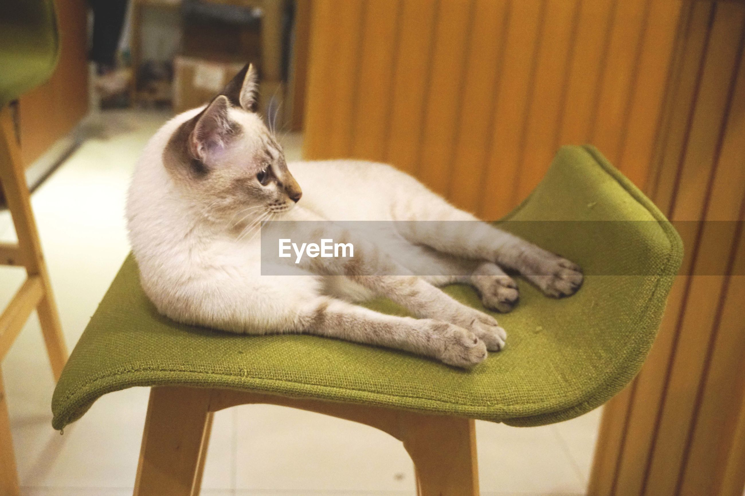 animal themes, one animal, pets, domestic animals, indoors, mammal, relaxation, domestic cat, cat, resting, feline, home interior, close-up, sleeping, lying down, sitting, no people, high angle view, home, wood - material