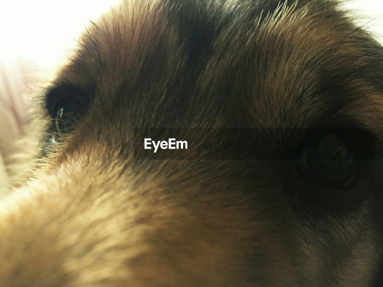 pets, one animal, dog, domestic animals, mammal, animal themes, animal head, close-up, portrait, animal nose, no people, looking at camera, day, indoors