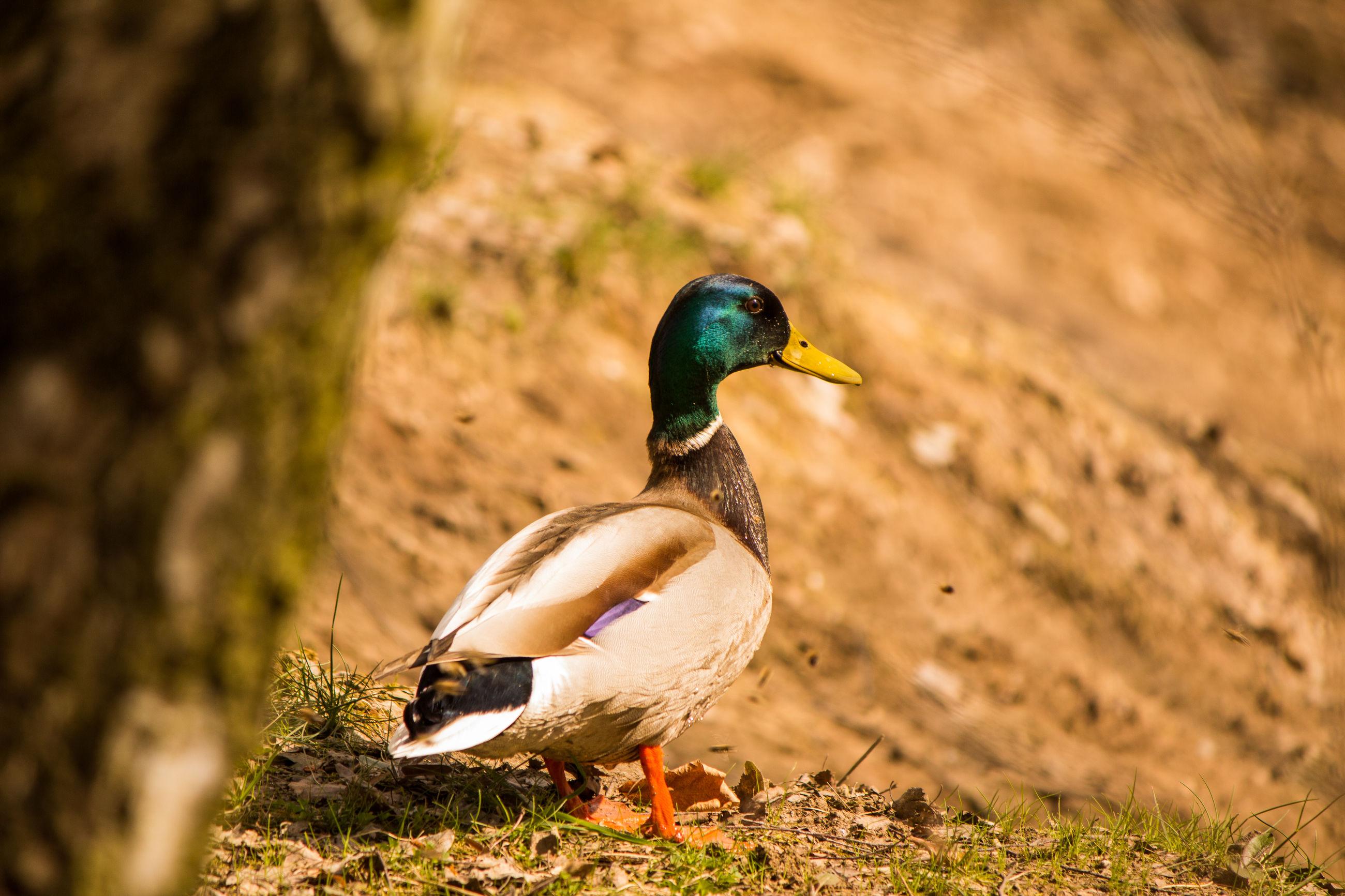 CLOSE-UP VIEW OF BIRD
