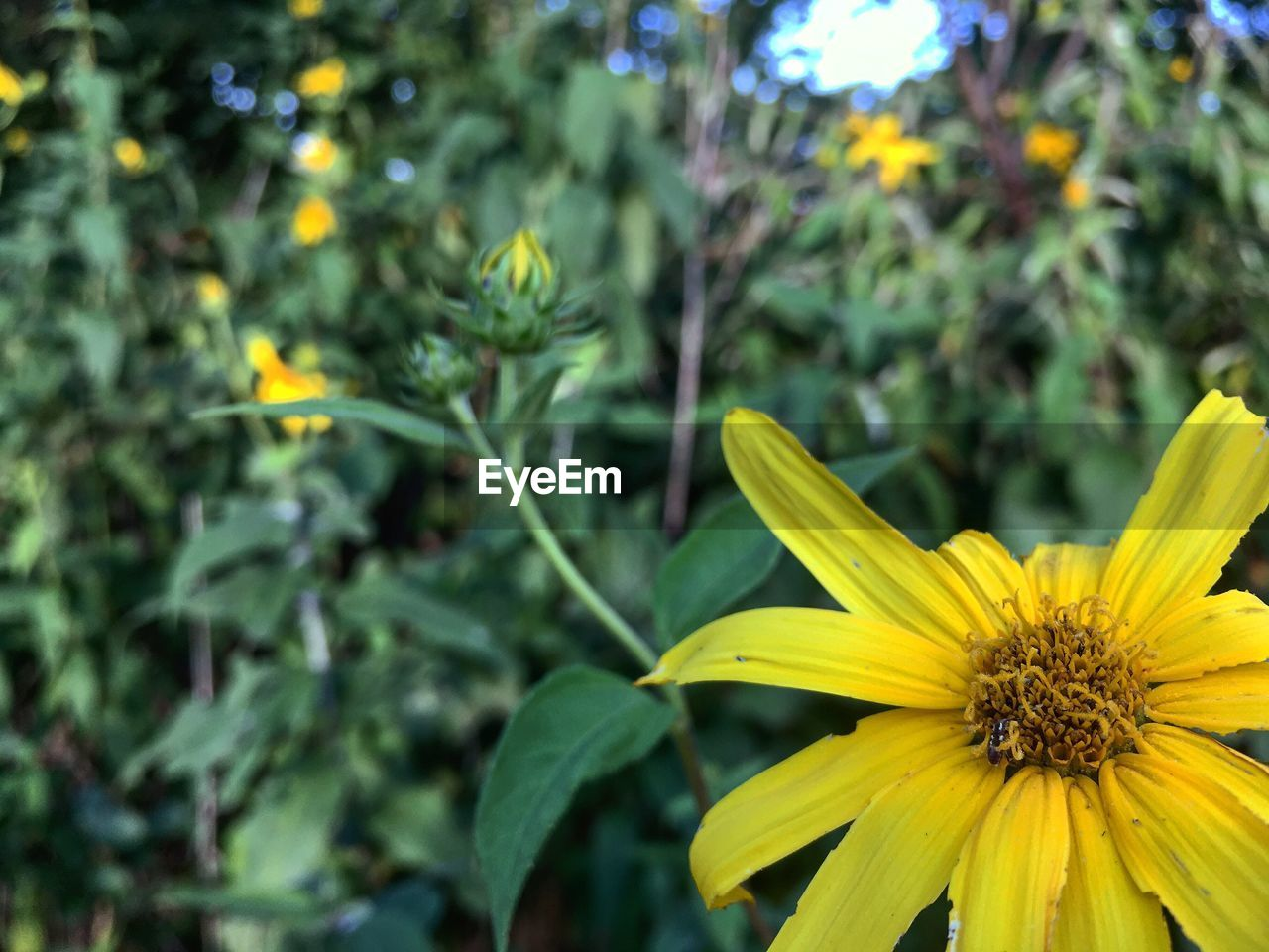 flower, petal, growth, fragility, nature, plant, beauty in nature, freshness, flower head, yellow, focus on foreground, blooming, outdoors, leaf, day, close-up, pollen, green color, no people
