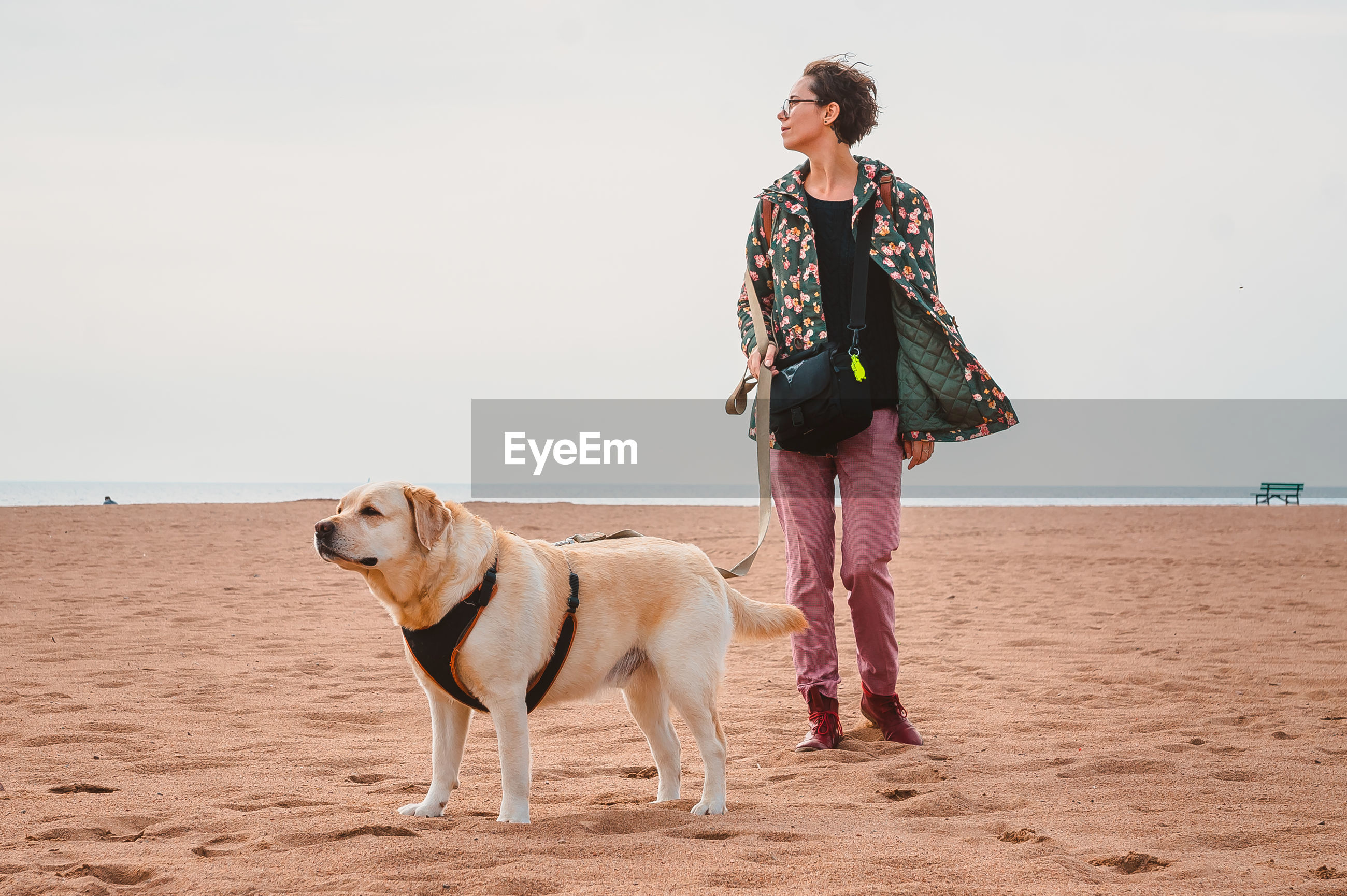 A girl and a fawn labrador retriever walk on a sandy beach. traveling with a dog on the sea