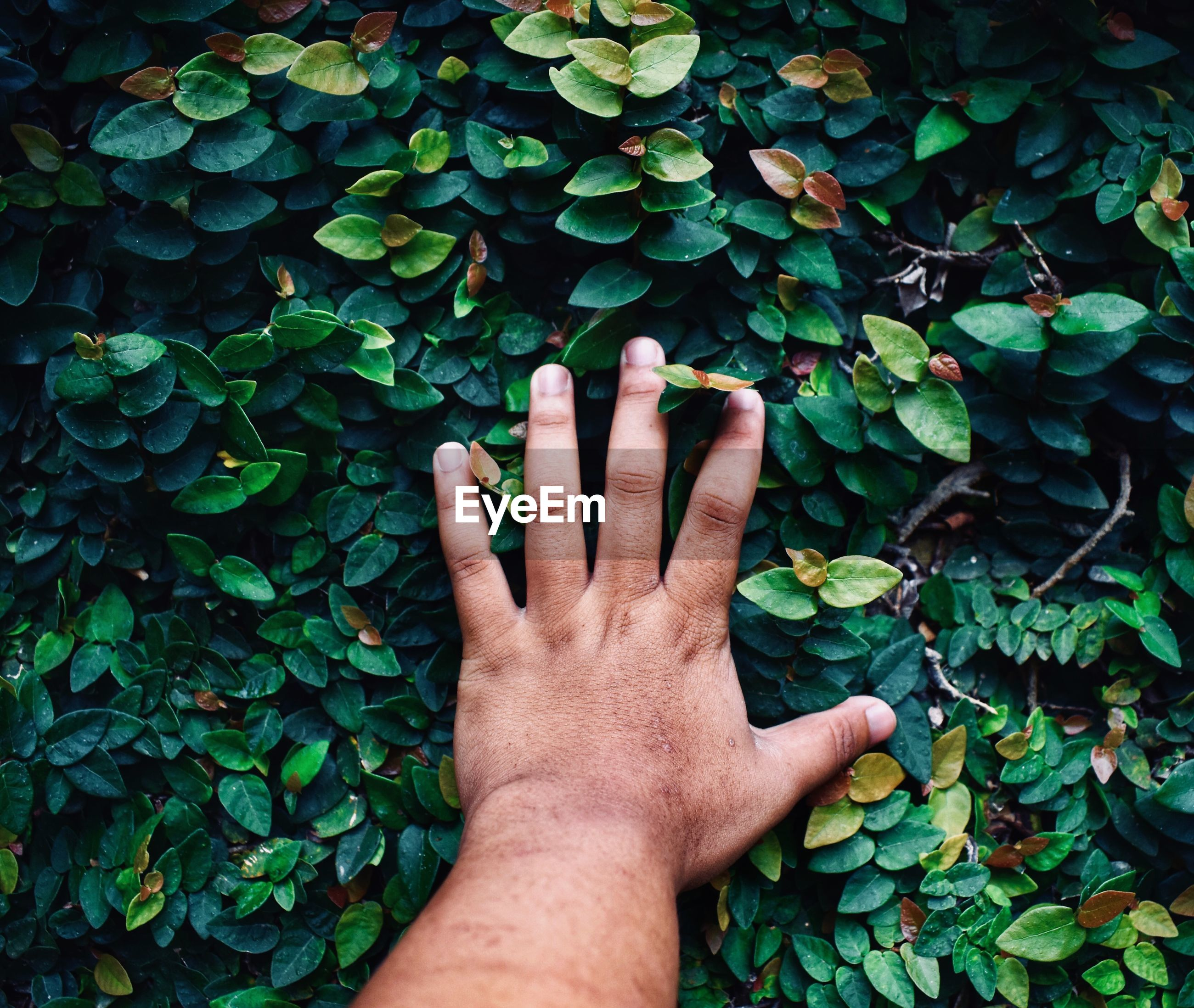 Cropped hand of man touching plants