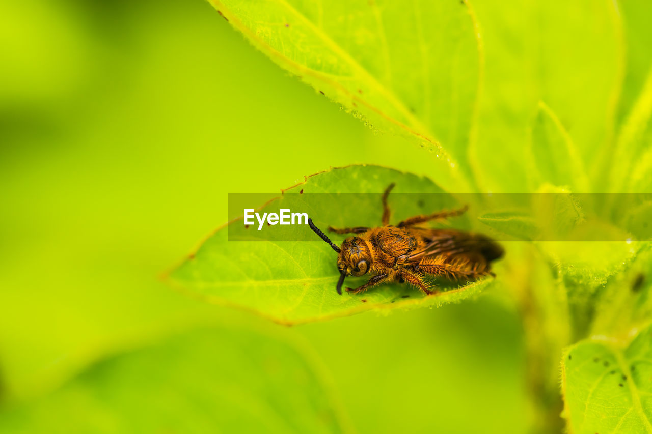 invertebrate, animal, insect, animal wildlife, animal themes, one animal, animals in the wild, green color, plant part, leaf, close-up, nature, no people, selective focus, arthropod, plant, day, beauty in nature, zoology, growth, outdoors, animal wing, pollination