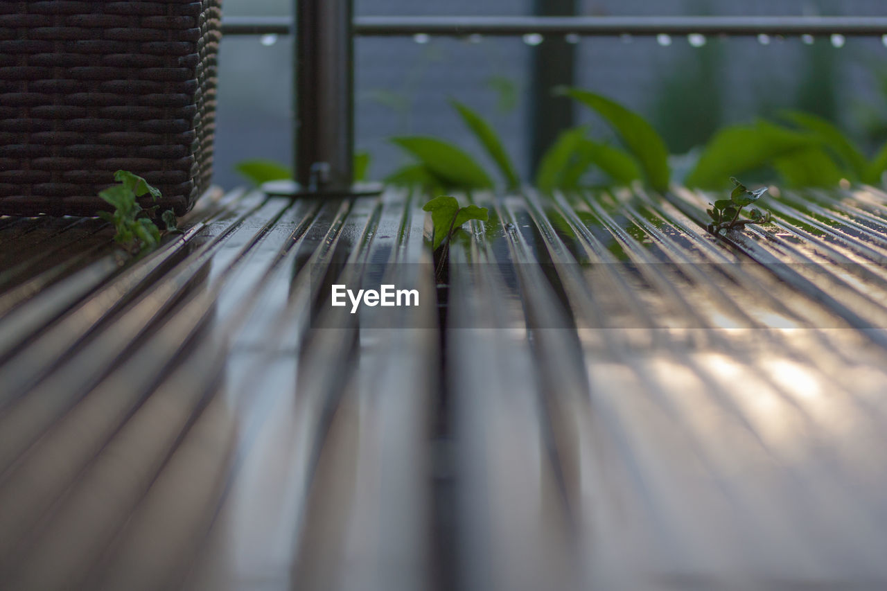 selective focus, plant, plant part, leaf, nature, no people, green color, growth, close-up, day, beauty in nature, outdoors, wood - material, surface level, pattern, metal, architecture, potted plant, vulnerability, freshness, leaves