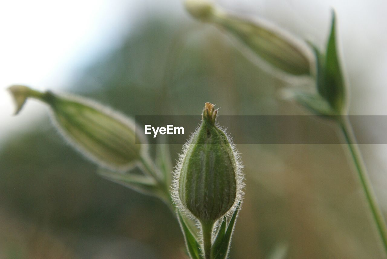 nature, plant, growth, green color, no people, close-up, day, focus on foreground, beauty in nature, outdoors, leaf, animal themes, freshness