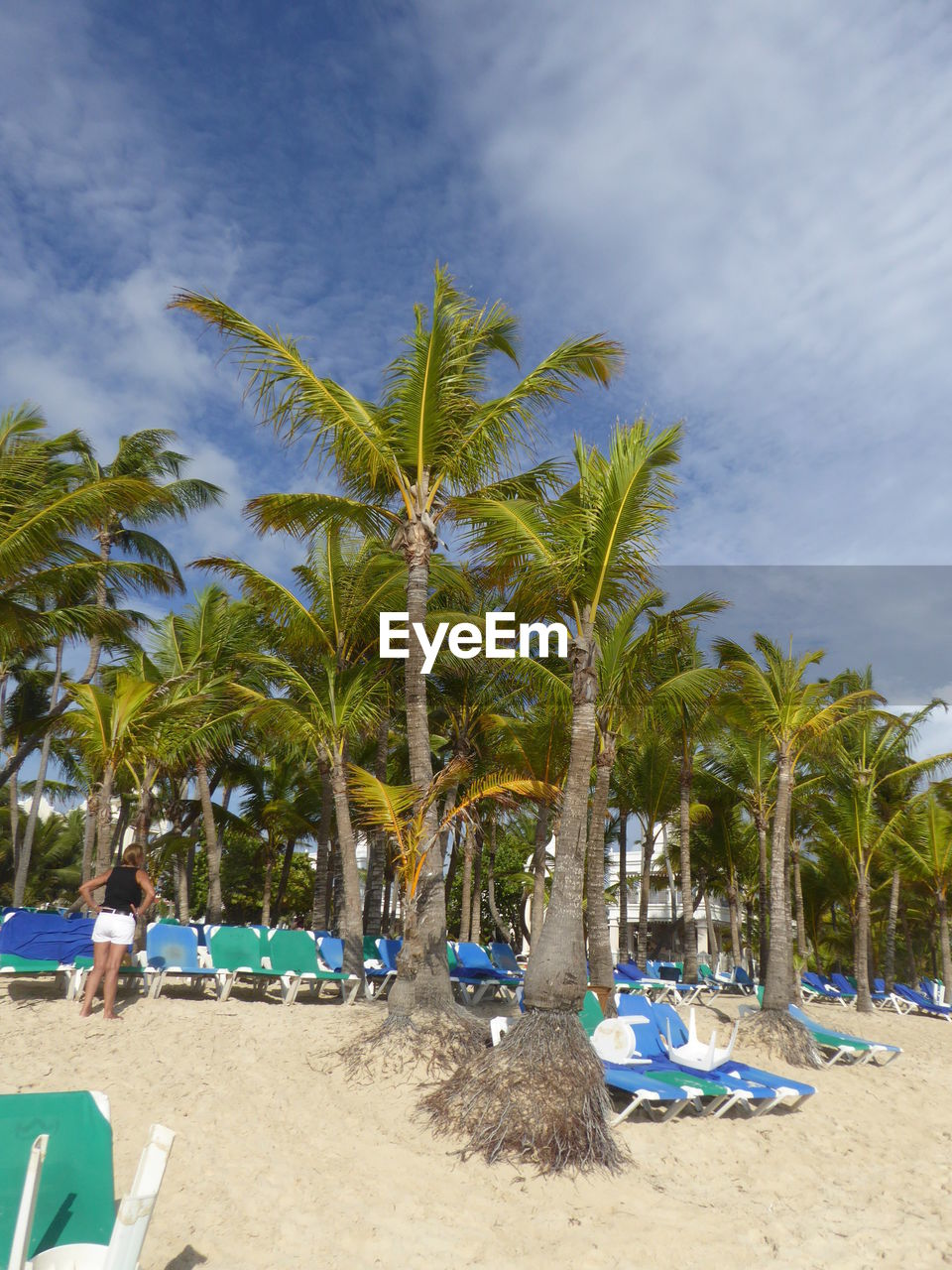 palm tree, beach, sand, tree, nature, sky, beauty in nature, sea, cloud - sky, outdoors, day, scenics, tranquility, no people, moored, growth, water, nautical vessel, horizon over water