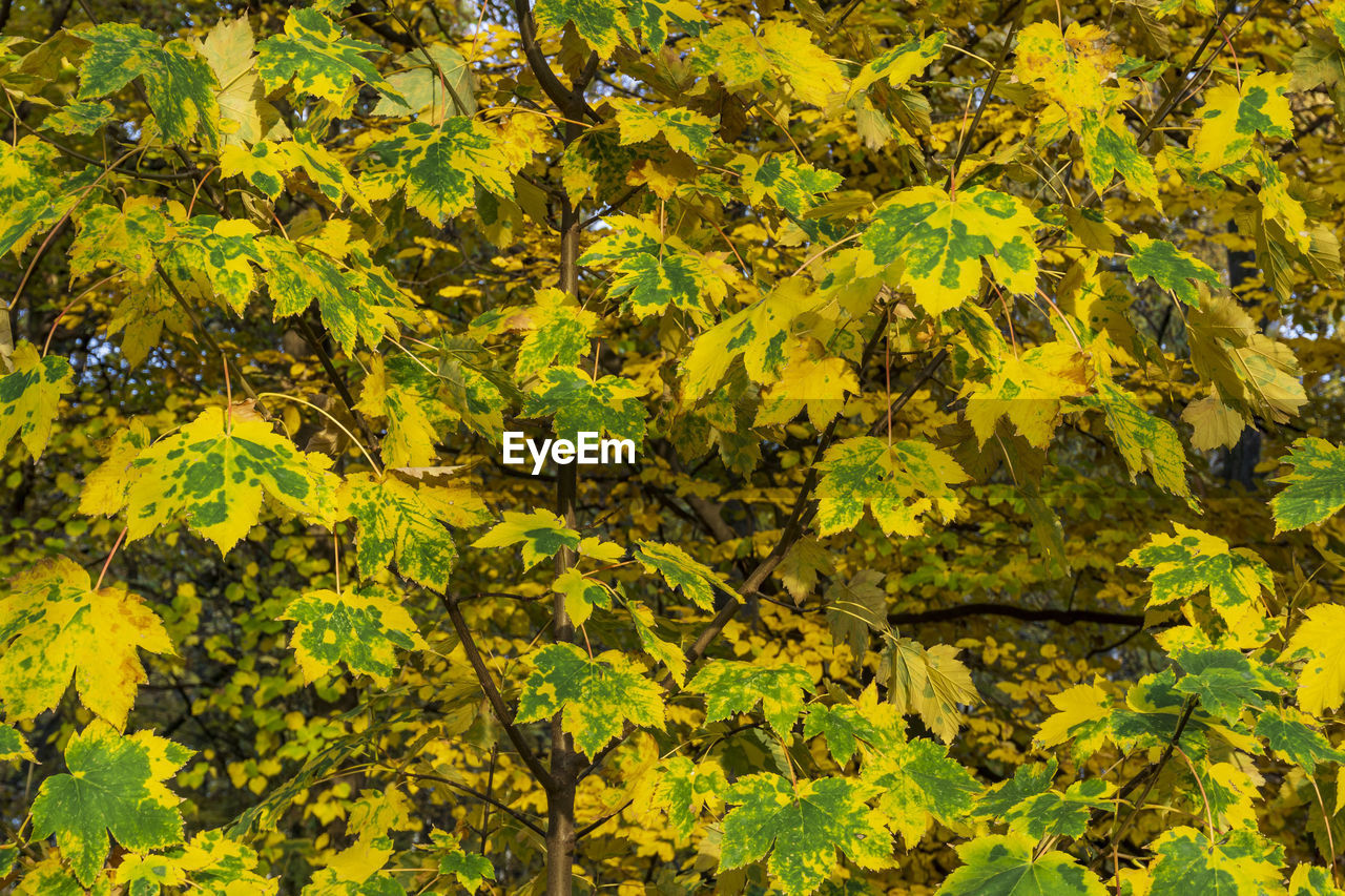 Close-Up Of Yellow Leaves On Plant In Forest