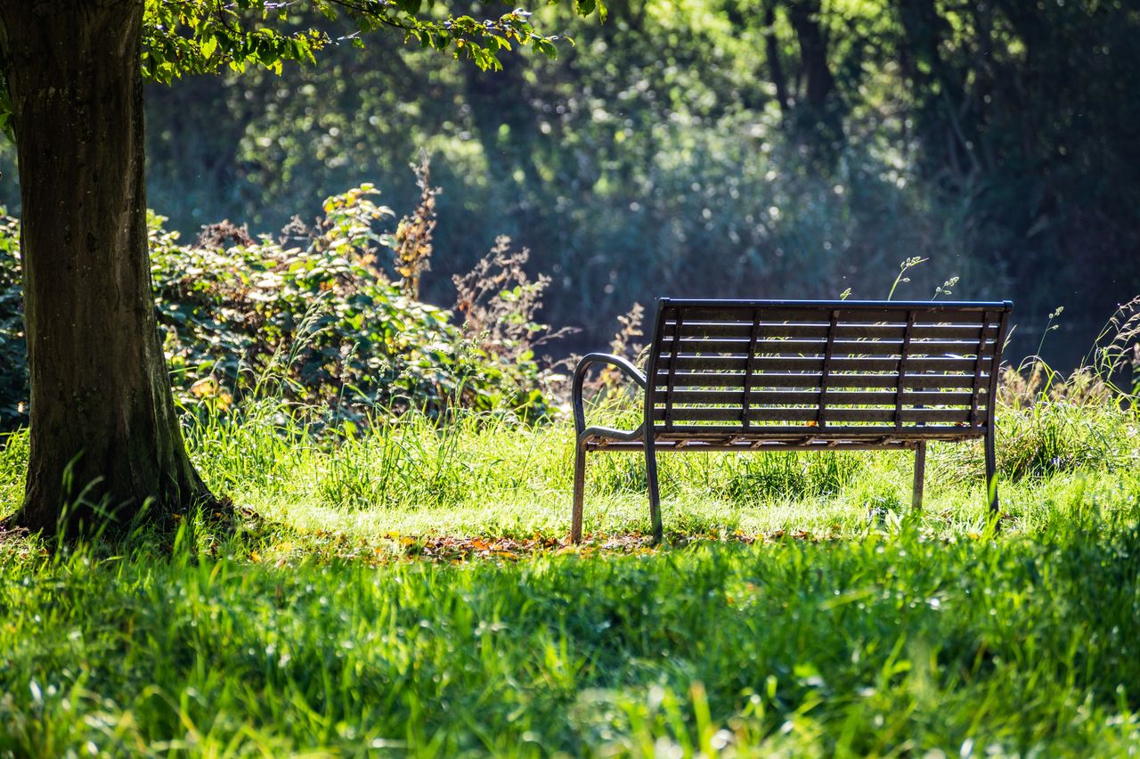 plant, tree, seat, bench, grass, growth, nature, green color, park, day, empty, trunk, land, tree trunk, park - man made space, tranquility, field, no people, sunlight, selective focus, outdoors, park bench