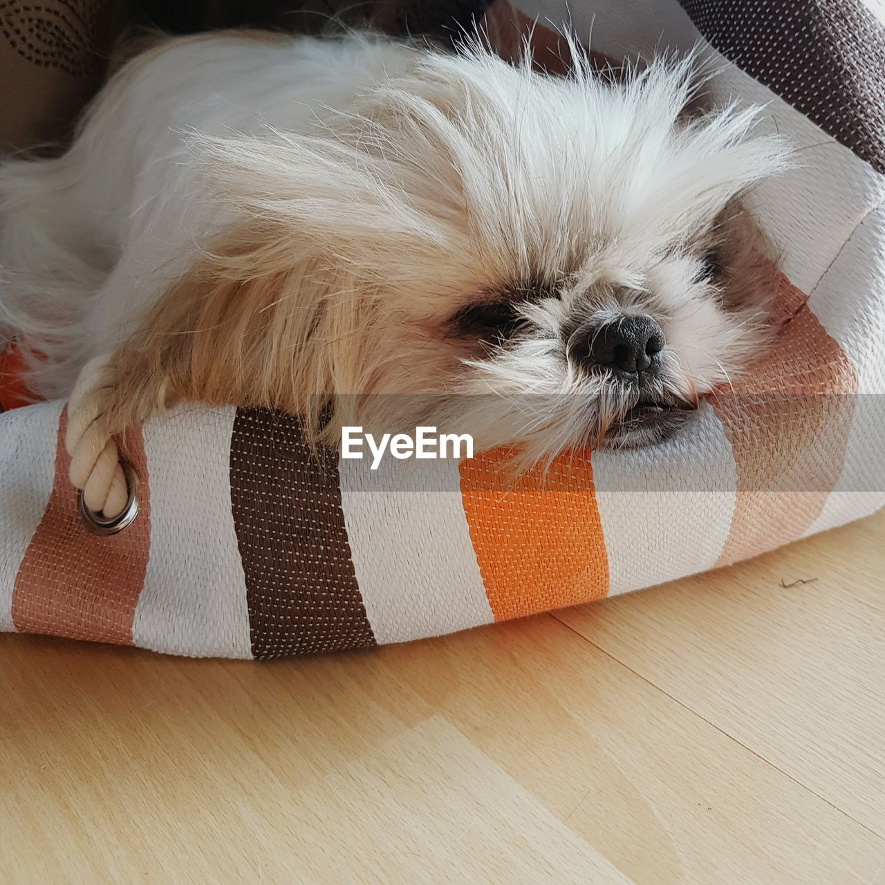 pets, dog, one animal, animal, puppy, mammal, domestic animals, sleeping, animal themes, young animal, indoors, no people, close-up, vet, day
