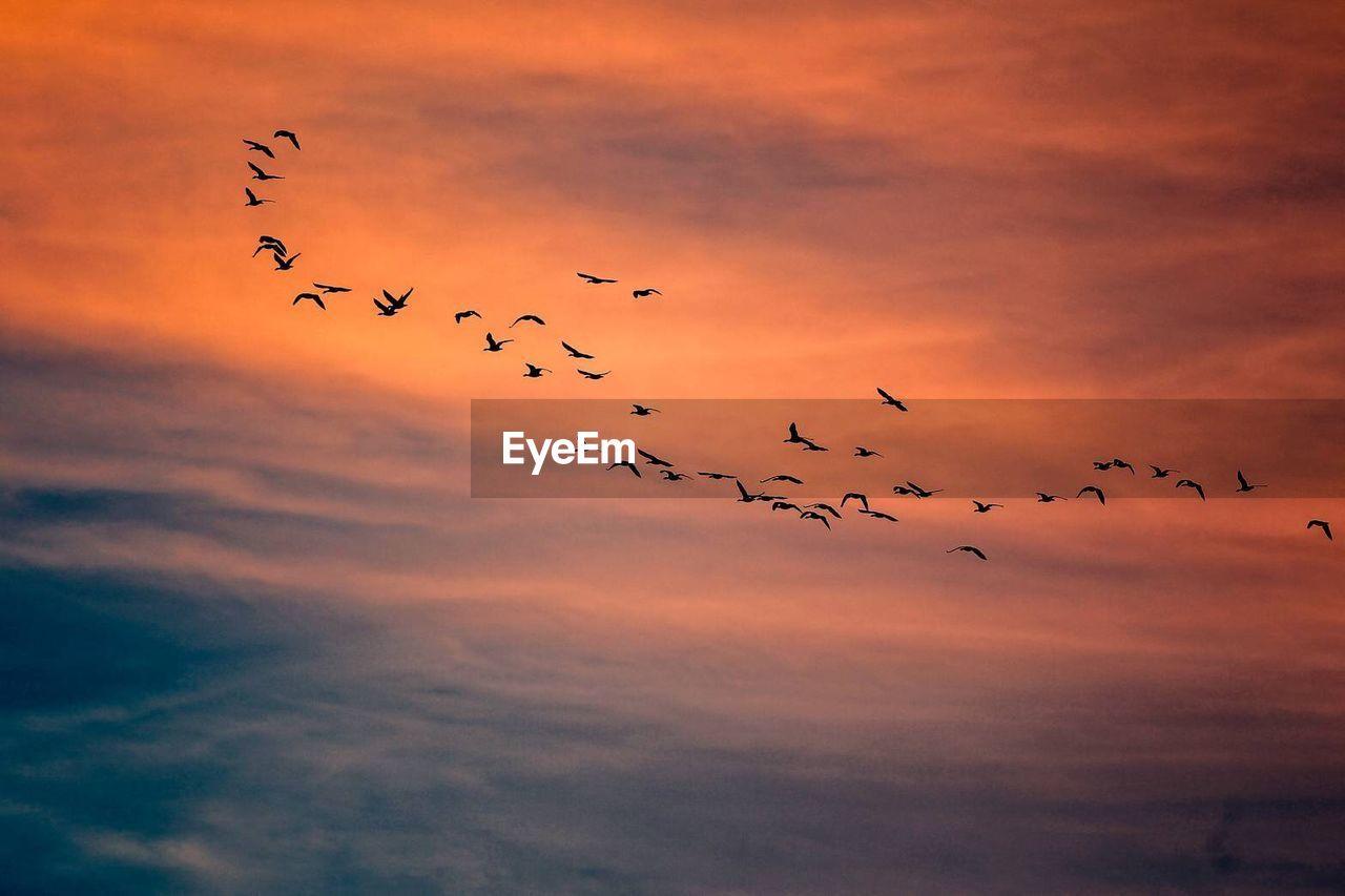 Flock Of Birds Flying Over Sky