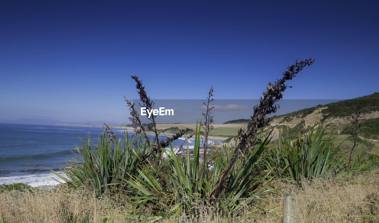 GRASS GROWING ON BEACH AGAINST CLEAR BLUE SKY