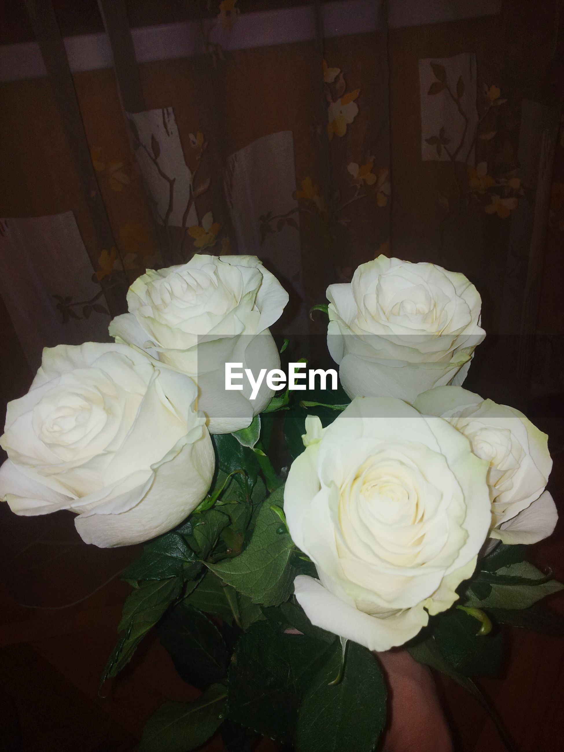 flower, petal, rose - flower, flower head, fragility, freshness, indoors, beauty in nature, rose, white color, close-up, growth, high angle view, blooming, nature, bunch of flowers, bouquet, plant, blossom, no people