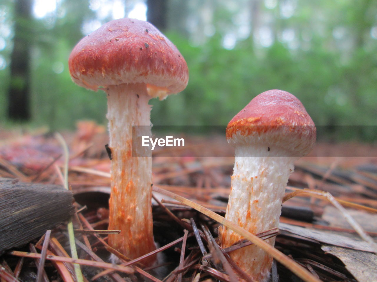 Close-Up Of Mushroom Growing Outdoors