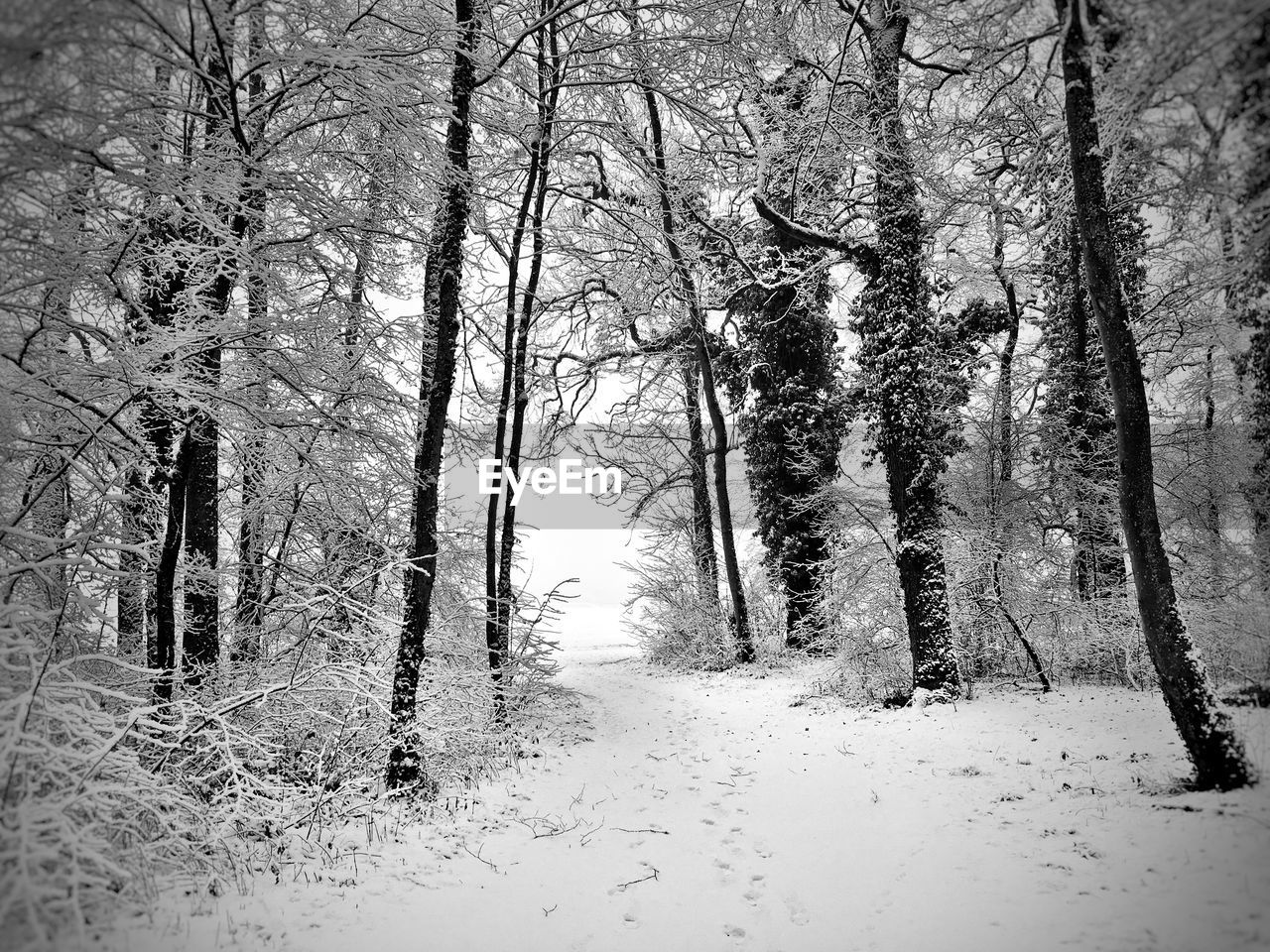 tree, nature, tranquility, beauty in nature, tranquil scene, winter, forest, scenics, the way forward, bare tree, cold temperature, no people, growth, tree trunk, snow, day, outdoors, landscape, branch