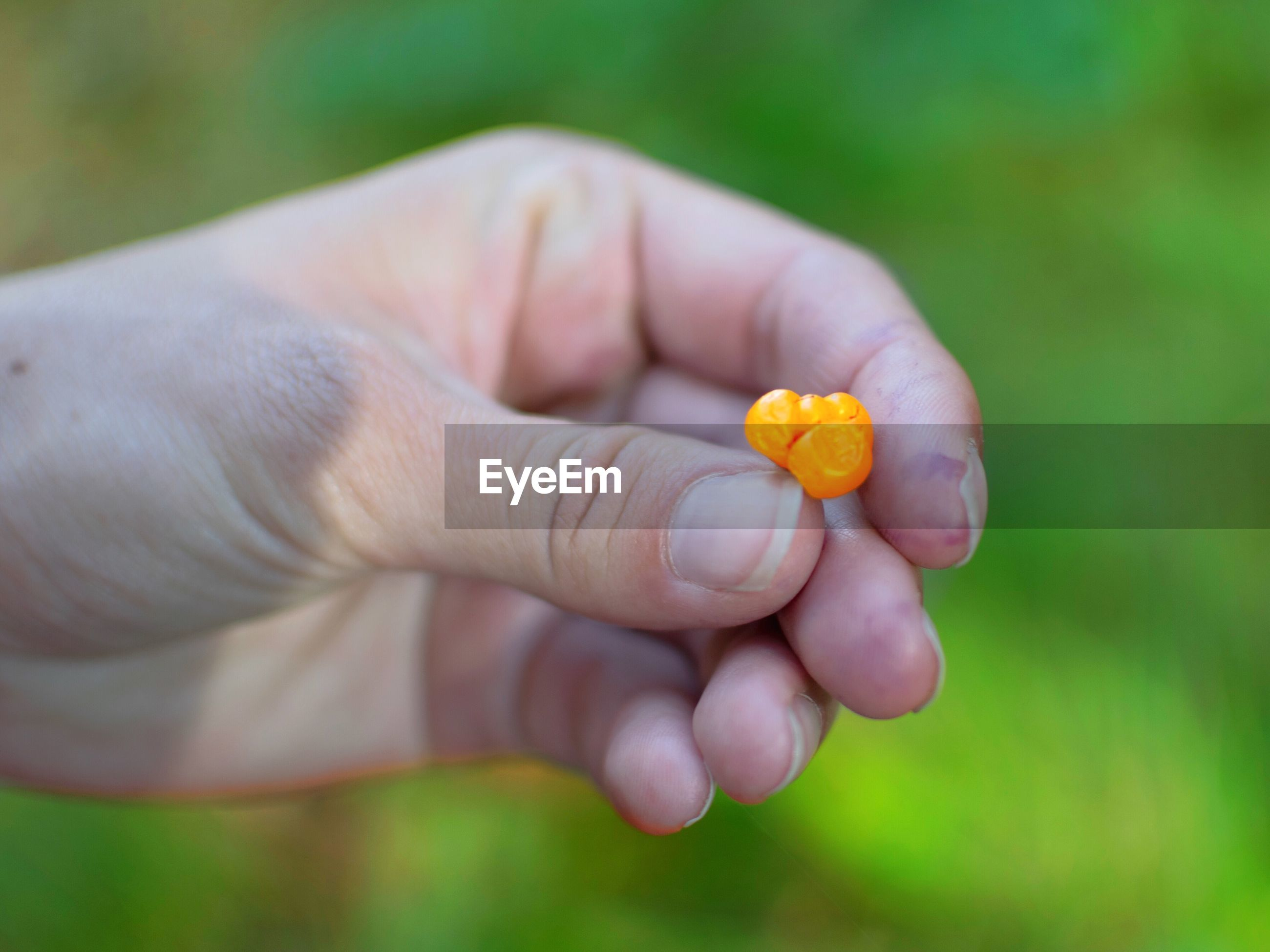 CLOSE-UP OF PERSON HAND HOLDING ORANGE