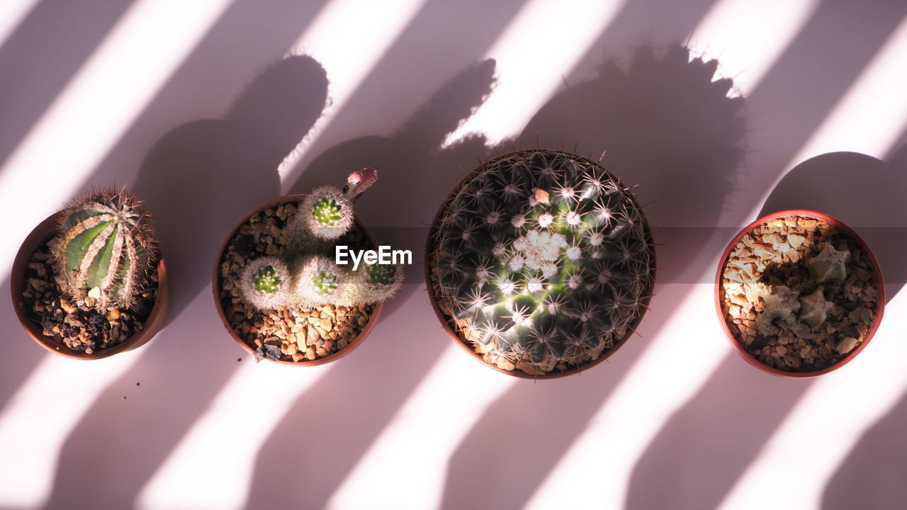 Directly above shot of potted cactus on table
