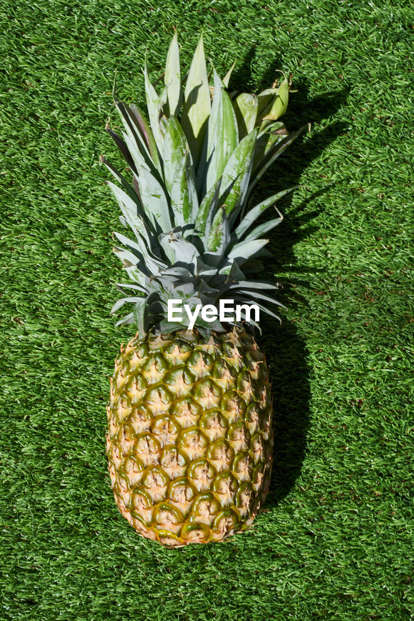 Close-up of pineapple on grassy field